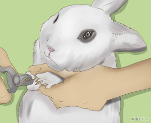 Trim-Your-Rabbit's-Nails