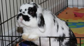Rabbit looking for adopter