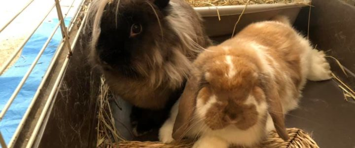 Find the Perfect Match for Your Rabbit